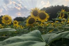 More sunbeams