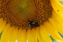More bee action...