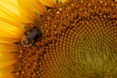 Rocking the pollinatin'... :)