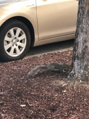 Sneaky squirrel...