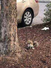 Sometimes you feel like a nut...